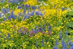 Alpine Wildflowers Stockfoto