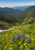 Alpine Wildflowers Stockbilder