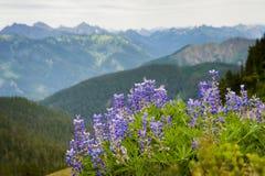 Alpine Wildflowers. Stock Image