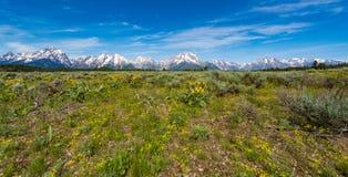Alpine Wildflowers in großartigem Nationalpark Teton Lizenzfreies Stockfoto