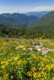Alpine Wildflowers Royalty Free Stock Photo