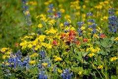 Alpine Wildflowers Stock Photography