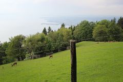 Alpine wildlife park animals and lake constance in B royalty free stock photo