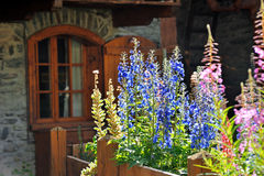 Alpine window with violet and pink flowers Stock Image