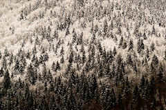 Alpine winter scenery - freezing Royalty Free Stock Photography