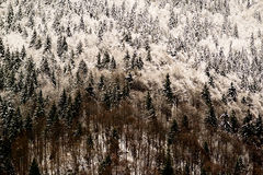 Alpine winter scenery - freezing Royalty Free Stock Image