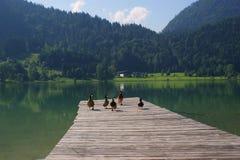 Alpiner See - Österreich - Thiersee lizenzfreies stockfoto