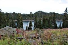 Alpiner See durch die Evergreens lizenzfreie stockfotos