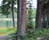 Alpiner See durch die Evergreens stockfotografie