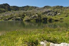 Alpiner See im Sommer Lizenzfreies Stockfoto