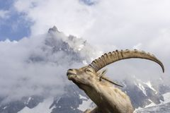 Alpiner Steinbock auf einem Hintergrund von Bergen lizenzfreie stockfotos