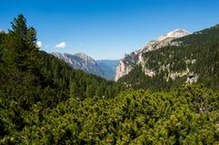 Alpiner Wald Lizenzfreies Stockbild