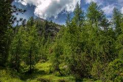 Alpiner Wald Lizenzfreie Stockfotografie