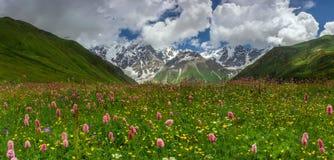 Alpines Feld Stockbilder
