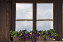 Alpines Fenster der purpurroten Petunie Stockbild