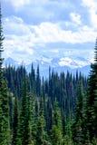 Alpines Tal mit Bäumen Stockfotografie