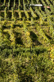 Alpines vineyards Royalty Free Stock Photos