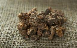 Alpinia galanga asciutto, Tormentil - erecta del Potentilla Immagini Stock