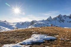 Alpinismo dello sci nelle alpi Fotografia Stock Libera da Diritti
