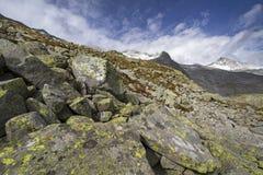 Alpinismo nelle alpi italiane del nord Immagini Stock