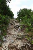 Alpinismo su un percorso con le radici in Austria Immagine Stock