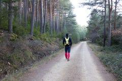 Alpinista che cammina nella foresta Fotografia Stock Libera da Diritti