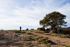 Alpinista che guarda al paesaggio vicino ad una quercia Fotografia Stock Libera da Diritti