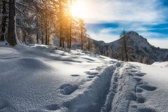 Alpinista dello sciatore della pista Fotografia Stock