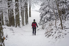 Alpinista nella foresta della neve Immagini Stock