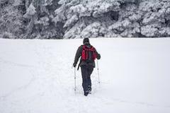 Alpinista nella foresta della neve Immagine Stock Libera da Diritti