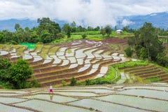 Alpinista non identificato che pianta riso Fotografie Stock