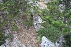 Alpinista sul ponte di attaccatura in Gebirgsvereinssteig, bacchetta di Hohe Fotografie Stock