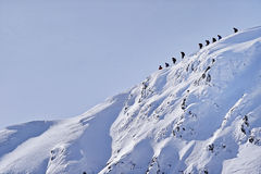 Alpinisti sulla cresta delle montagne di Fagaras nell'inverno Fotografia Stock