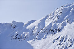 Alpinisti sulla cresta di Fagaras nell'inverno Fotografia Stock Libera da Diritti