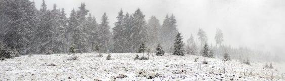 Alpino é o clima Fotos de Stock Royalty Free