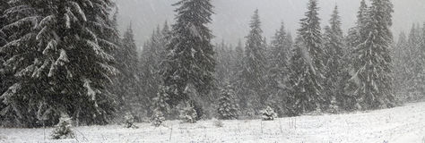 Alpino é o clima Fotos de Stock