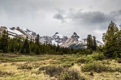 Alpino e foresta vicino alla strada panoramica di Icefield Immagini Stock