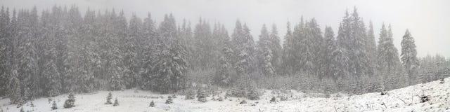 Alpino es el clima Foto de archivo libre de regalías