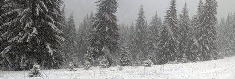 Alpint är klimatet Arkivfoton
