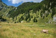 alpint landskap royaltyfria bilder