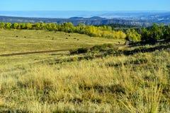 Alpint landskap av Colorado under lövverk Royaltyfri Foto