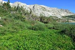 Alpint landskap i medicinpilbågebergen av Wyoming Arkivfoton