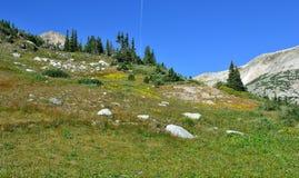 Alpint landskap i medicinpilbågebergen av Wyoming Royaltyfri Foto