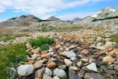 Alpint landskap i medicinpilbågebergen av Wyoming Arkivbilder