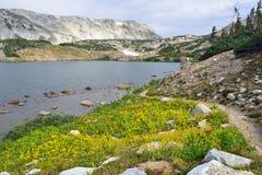 Alpint landskap i medicinpilbågebergen av Wyoming Arkivfoto