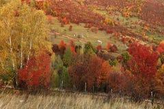 Alpint landskap i nationalparken Retezat Royaltyfria Bilder