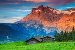 Alpint lantligt landskap med den gamla träladugården, Grindelwald, Schweiz, Europa royaltyfria foton
