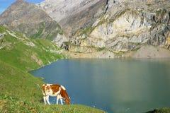 alpint liggandeberg royaltyfria foton