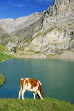 alpint liggandeberg royaltyfri bild