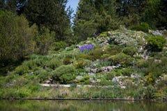 Alpinum nel giardino botanico Fotografie Stock Libere da Diritti